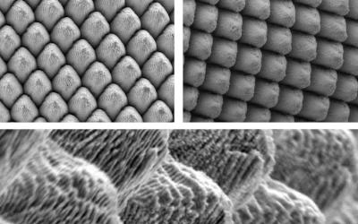 Laser Restructuring Enhances Electrode Properties